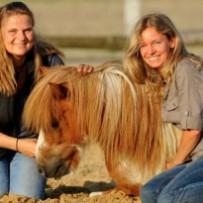 Pferdekonferenz